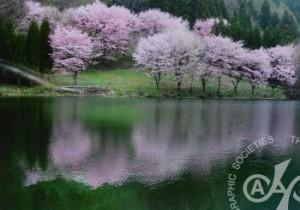 「湖面に咲く」