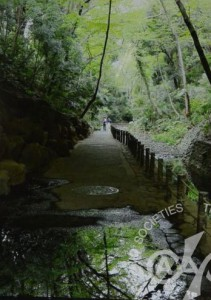 「新緑の等々力渓谷」