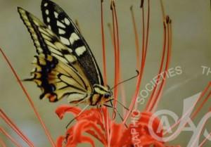 「花と蝶」