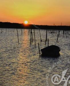 「印旛沼の夜明け」