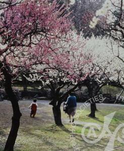 「春の日差し」