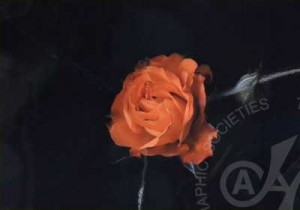 「闇に咲く花」