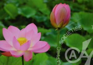 「花の命は・・・」