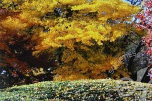 「秋深まる」