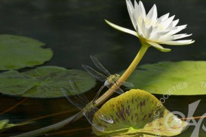 「池の片隅にて」