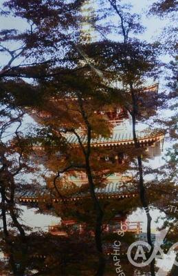 「晩秋の五重塔」