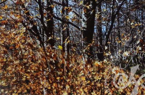 「木枯らしが吹いた日」