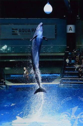 「イルカのジャンプ」
