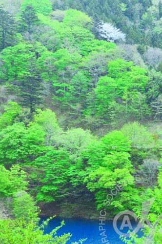 2017年5月例会 次点 「万緑に桜一点」 H.S.さん